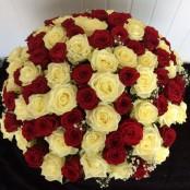 100 Red & White Roses